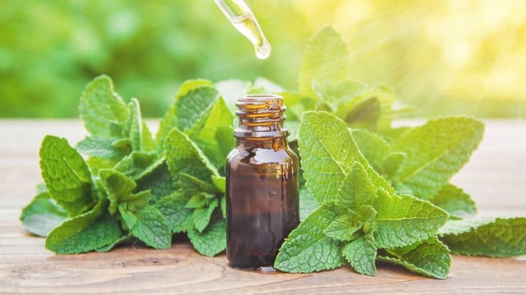 The Natural Magic of Peppermint